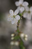 Touch (oskaybatur) Tags: dof spring march pentaxkr samyang100macro mf nature oskaybatur türkiye turkey turkei 2018 çerkezköy flower white life sprig pentaxart justpentax