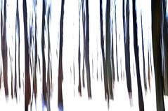 Winter Sonnen Licht - Winter Sun Light (Bernd Kretzer) Tags: wald forest bäume trees winter schnee snow icm