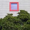 the crawl of nature (msdonnalee) Tags: window ventana janela fenster finestra fenêtre shrub bush dwwg