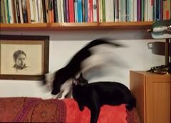 svoooooshhhhh (g_u) Tags: gu ugo casa gatti cat poirot mukki animali