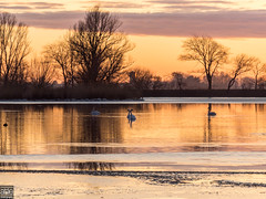 Sunset in North-Holland (atiephotography) Tags: sunset park lake tree sky swans water ice birds reflections clouds golden scene landscape nature sun tranquil