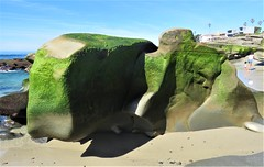 Green Whale Rock (moonjazz) Tags: green rock california moss lajolla sandiego tide beach color photography geology
