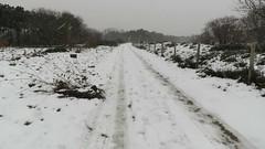 When it was still snowing... (Elisa1880) Tags: snow snowing sneeuw vorst frost winter solleveld den haag the hague nederland netherlands sneeuwvlokken snowflakes