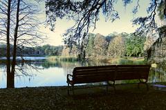 Lake Lawsona (GOJR.) Tags: 135 orlando florida nikkoro35mmf2 nikonf2 longexposure asa16 kodak2254 analog film lake