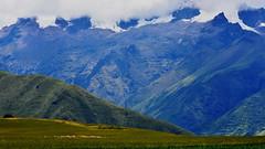 El rebaño (Miradortigre) Tags: peru andes ovejas sheep breeding pastores landscape paisaje cordillera ridge