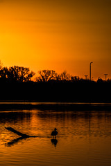 I Stand Alone (HardDriveKC) Tags: art lightroom adobe dslr digitalslr photograph camera nikon digital missouri photo photography states unitedstatesofamerica united america unitedstates jacksoncounty nature manual manuallens sky d3400 pond lake bird kansascity orange sunrise sun rise nikonflickrawardgold