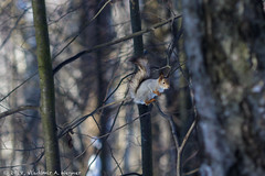 2018-03-19-08-28-59-7D2_3972 (tsup_tuck) Tags: 2018 march moscow spring woods