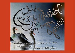 « Intelligence without ambition is a bird without wings » Walter H Cottingham. (Calligraphy typography écriture speculaire) Tags: reversewriting handwriting oiseau bird birds calligrafia calligraphie calligraphy artwork art painting writingcommunity writing citation proverbe quotes quote quotations quotation