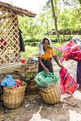 Tamil lady picking tea in Hatton, Sri Lanka (Alice Luker) Tags: sri lanka hatton woman portrait tea ceylon working nature green tropical plantation baskets sun asia documentary travel