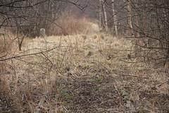 Kostrzyca train station 12.03.2018 (szogun000) Tags: kostrzyca poland polska railroad railway rail pkp station track platform disused overgrown d29308 dolnośląskie dolnyśląsk lowersilesia canon canoneos550d canonefs18135mmf3556is