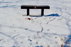 bench (Gustav2Adolph) Tags: bench memorial negativespace mankato nikon d3100