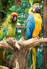day twelve at the croco-cun zoo (dolanh) Tags: mexico zoo crococun crocodilefarm yucatan macaw