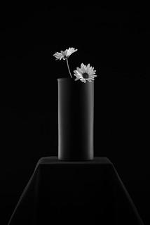 Round Black Vase With Two Gerberas