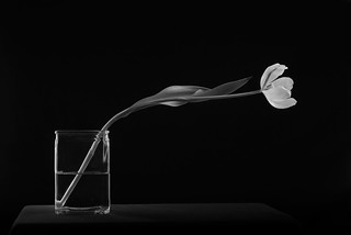 Clear Vase And Tulip