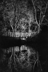 Reflection in B&W (Jan 1147) Tags: reflection reflectie spiegeling weerspiegeling boom bomen tree trees blackandwhite bw zwartwit zw monochroom monochrome depinte belgium