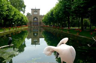 Wilhelma Stuttgart, Pelikane, Kormorane und Störche - Langer See im zoologisch-botanischen Garten Wilhelma in Stuttgart