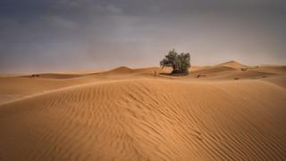 Stormy Sahara