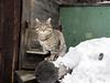 Meow~~ (MelindaChan ^..^) Tags: siberia russia 俄羅斯 西伯利亞 snow chanmelmel mel melinda melindachan irkutsk meow cat kitty lake baikal 貝加爾湖 2018