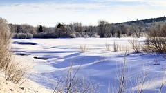 There's a river under here somewhere (Boganeer) Tags: miramichiriver river valley frozen snow ice frost neige hiver winter lhiver bogan landscape nature newbrunswick nouveaubrunswick atlanticcanada maritimes maritime canada canon canoneos 6d intervale