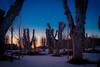 (mikper) Tags: trees barockparken sunset träd vinter park kallt winter solnedgång cold stockholmslän sverige se