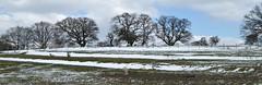 Winter Field. (jenichesney57) Tags: castlemorton worcestershire view scene fiels snow sheep countryside panorama trees panasoniclumixtz60 bleak