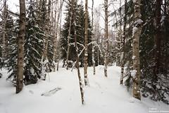 (alpros) Tags: sweden schweden sverige scandinavia northerneurope nordeuropa skandinavien färnebofjärden gästrikland gävleborgslän sandvikenskommun österfärnebosocken bärrek snow schnee snö vinter winter