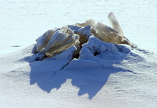 The outbreak of seaice.