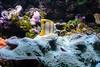 DSC_7817 (martindragon13) Tags: nswaustrailia sydney sydneyaquarium