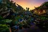 Sunset on Pandora (TheTimeTheSpace) Tags: waltdisneyworld disneyworld disney animalkingdom pandora avatar worldofavatar sunset nikond810 nikon142428 waterfalls alien