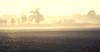 landscape #03 (::: I B :::) Tags: landscape field photoshop toscana morning sunshine mist mattino