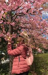 (annenormark) Tags: cherryblossom blossom sakura japan tokyo daiba