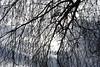 DSC_2231 (griecocathy) Tags: branche ciel nuage soleil ombre lumiere