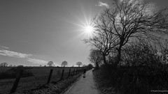 Winter walk (frankdorgathen) Tags: sky nature wideangle perspective winter ruhrpott ruhrgebiet werden essen landscape path silhouette tree rural sun light backlight monochrome blackandwhite