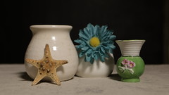 Still Life with Starfish (N.the.Kudzu) Tags: home tabletop stilllife starfish flower pottery vases canon70d