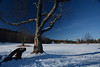 DSC_4660a (Fransois) Tags: tree champ field snow abimé adks adirondacks laviecontinue lifegoeson wrecked bluesky cielbleu hiver winter filtrepolarisant polarizingfilter newyorkstate upstatenewyork bleu blue