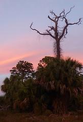 20180213_27 Winding Waters West Palm Beach Florida USA (FRABJOUS DAZE - PHOTO BLOG) Tags: windingwaters naturalarea westpalmbeach westpalm wpb palmbeachcounty pbc fl fla florida usa yhdysvallat sunshinestate auringonlasku sunset sundown dusk hämärä luontokuvaus naturephotography luonto nature