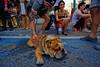 Tel Aviv (Hemo Kerem) Tags: israel telaviv street a7rm2 a7rii nikon20mmf4ai nikkor20mmf4ai ai20mmf4 ai420 tlv 20mm manualfocus mf nikon nikkor sony sonya7rm2 ilce7rm2 alpha streetparty purim costume makeup party dog buldog