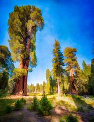 Sequoia Glade - Textured HDR Pano (byron bauer) Tags: byronbauer sequoia national park giant redwoods trees forest landscape texture painterly california sierra nevada mountains hdr highdynamicrange deed dwarfed medow glade field blue sky stag