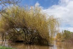 tree (Ca*Rt) Tags: benavente trees flood landscape river photography boat sorraia riverside portugal