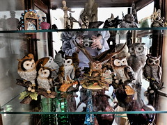 the owl shelf (LinderRox) Tags: odc birdsofafeather