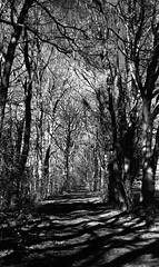 Fangorn (Rosenthal Photography) Tags: 20180202 landschaft bnw schwarzweiss ff400 zeven 35mm washiz400 ff135 schatten rodinal12521°c7min städte weg bw wald olympus35rd analog licht dörfer siedlungen landscape nature forest path track trail pathway way winter february blachandwhite mood olympus olympus35 35rd fzuiko 40mm f17 washi washiz redfilter red filter rodinal r09 125 epson v800