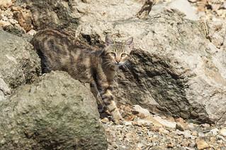 Cat in the wild