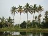 India 2017 216 (megegj)) Tags: gert india palm