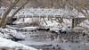 Canards sous la passerelle, Domaine Maizerets, Québec, Canada - 5232 (rivai56) Tags: canard colvert femelle duck mallard sony québec ducks under bridge
