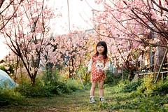 櫻花盛開之時 (LCHua-樺) Tags: 500d child taiwan 櫻花 sakura canon 50mm 小孩 泰安