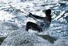 Kiteboarding[Explored] (BernieErnieJr) Tags: kiteboarding naples naplesbeach beach florida sonya9 sonyfe100400mm greatphotographers teamsony bernie duhamel beachthe sunshine waves ocean gulfofmexico