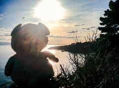 24.03.18: Enjoy the sunshine (Wang Wang 22) Tags: cute pug mops nici plüsch sweet hund dog wangwang dublin howth sun sea spring