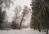 Walk in the Winter Forrest (KalleKrabowsky) Tags: winter forrest taunus hohe wurzel