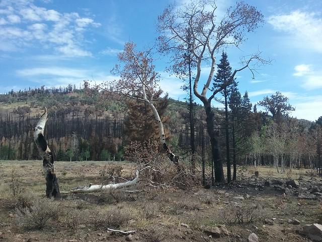 Duck Creek Fire 5