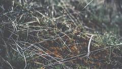 PB_012618_27 (losing.today) Tags: brianyoung oregon pacificnorthwest portland pdx portlandoregon portlandor winter nature outdoors naturepark plantlife plants moodyseason darkseason losingtoday grass grassstudies